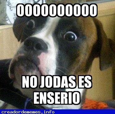 Nuevo Meme Perro Asustado Imagenes Divertidas De Animales Memes Perros Memes