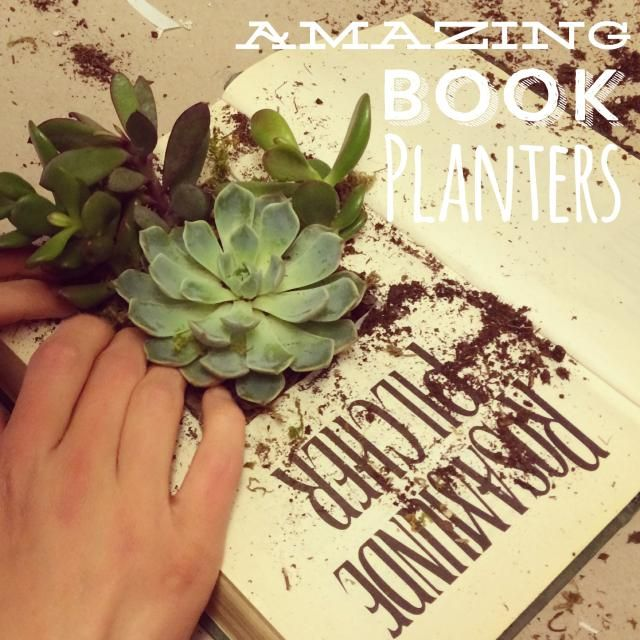 The 30 cutest and most creative diy planters indoor succulent seven super pretty indoor succulent planter ideas a succulent garden that fits in a book mightylinksfo