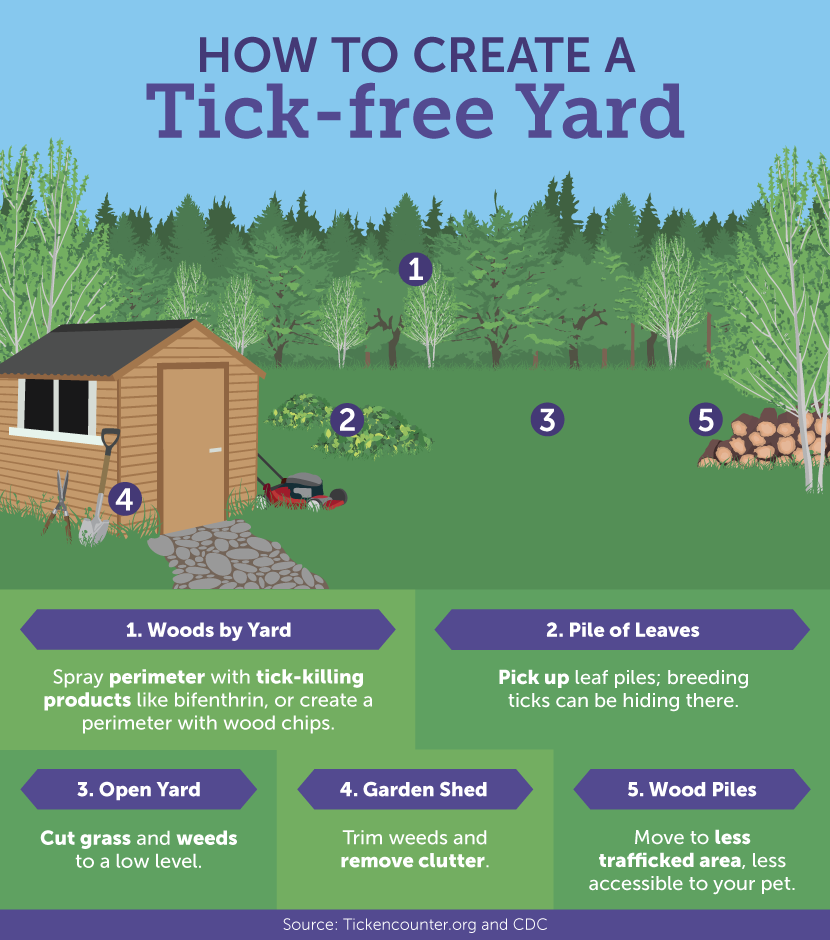 5 Ways To Get A Tick Free Yard And Simple Ways To Protect Your