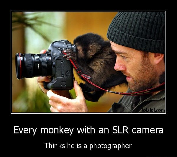 Dslr Camera Funny Quotes: Every Monkey With An DSLR Camera Thinks He Is A