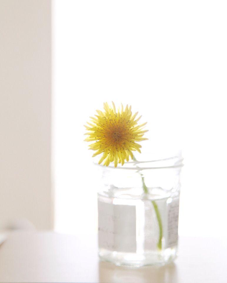 35mmf2 on instagram flower dandelion taraxacum platycarpum instaflower vase flowerstagram yellow タンポポ たんぽぽ 蒲公英 ほうこうえい ダンデライオン 花瓶 たんぽぽ タンポポ 黄色