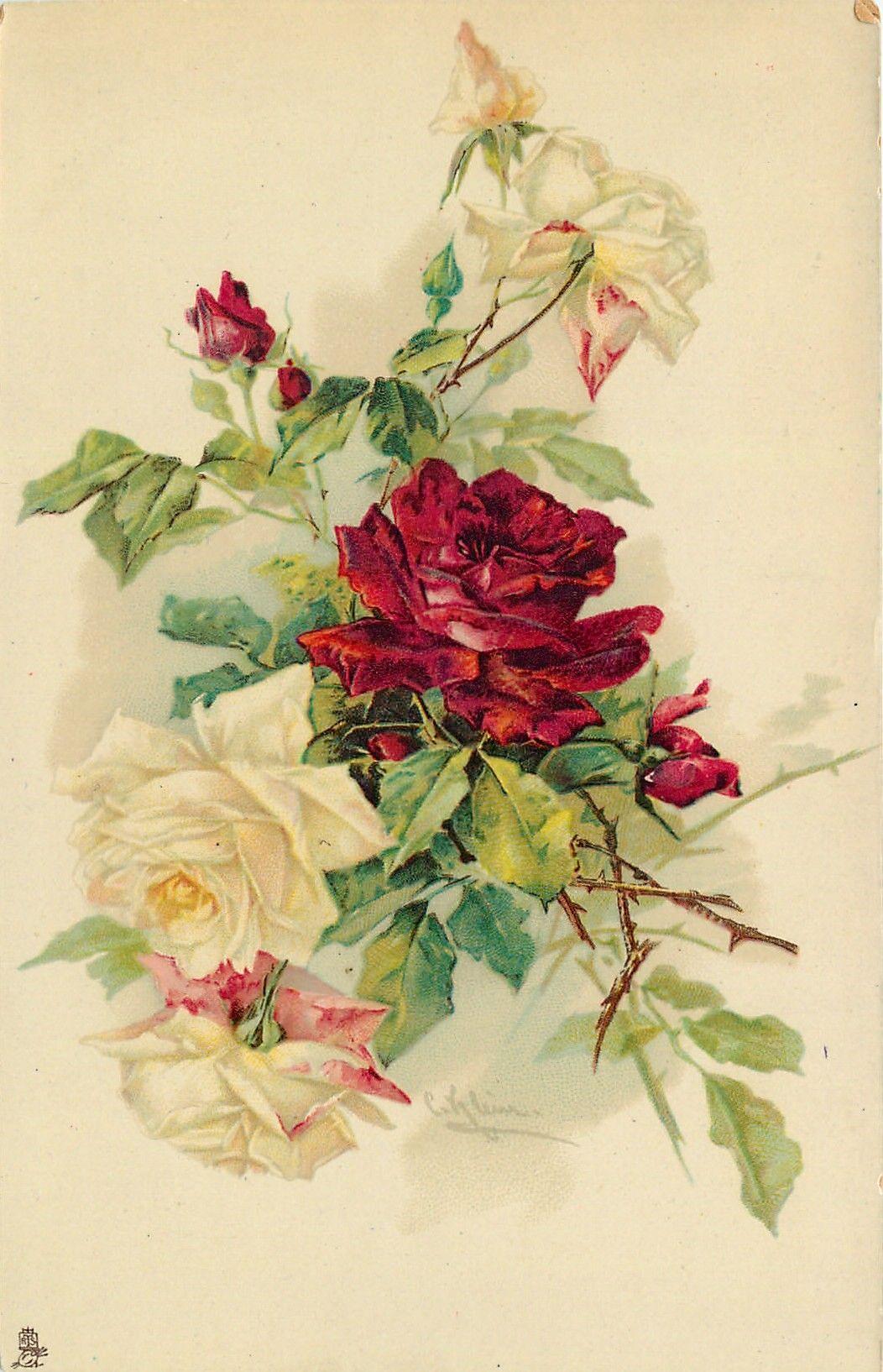 увлекается старинные открытки розы описание курорта