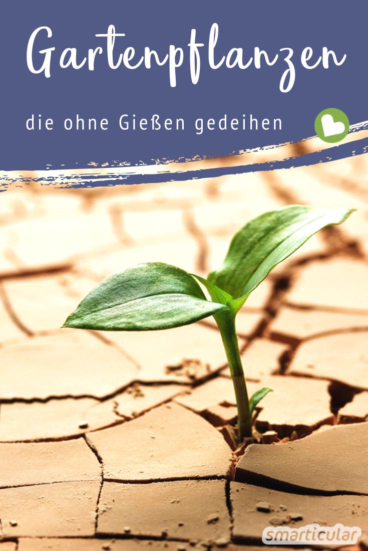 Gute Ernte Ohne Giessen Diese Gemuse Krauter Und Blumen Brauchen Wenig Wasser Pflanzen Pflanzenblatter Gartenpflanzen