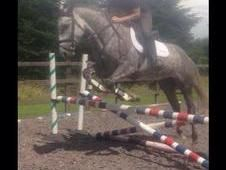 Eye catching ID x ISH Mare All Rounder Horse for sale in Gotham, Nottinghamshire, East Midlands :: Horsemart