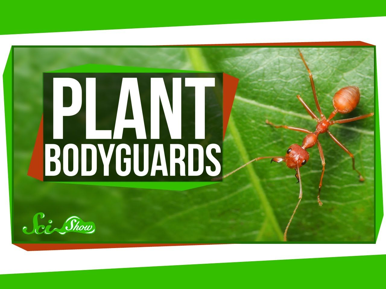 How Plants Attract Bodyguards