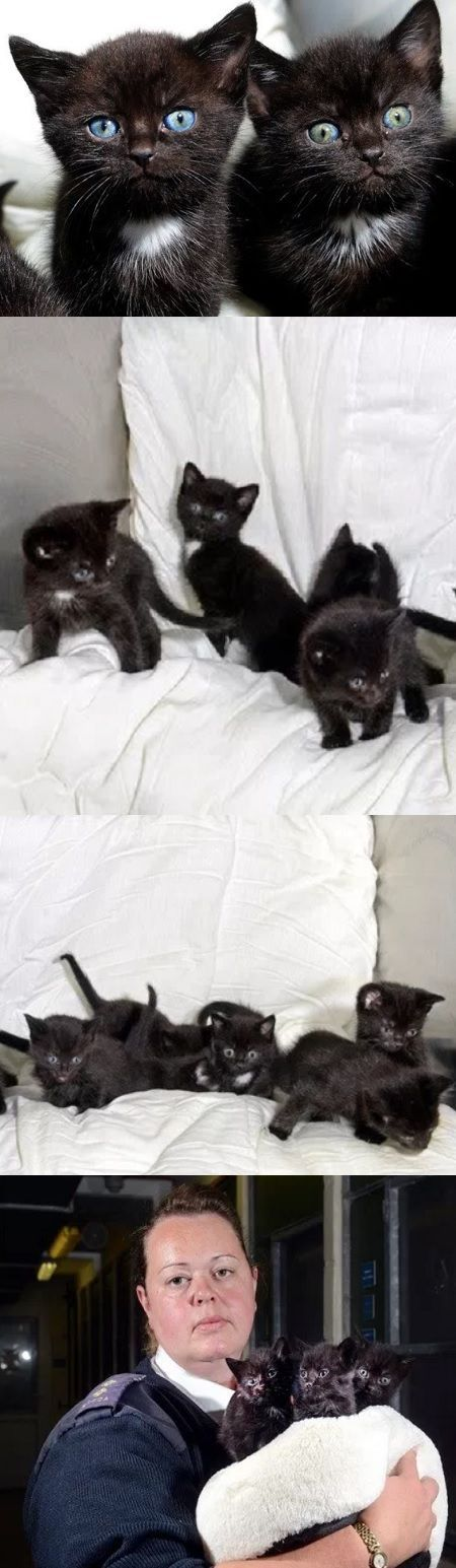 Woman Finds 15 'Crying' Kittens Stuffed In Suitcase On Her