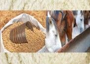 Horse Feed Samples