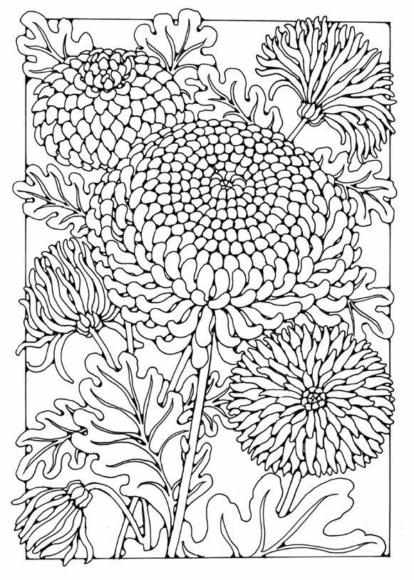 Chrysanthemum Flower Designs To Colour By Dandi Palmer Adult Colouring