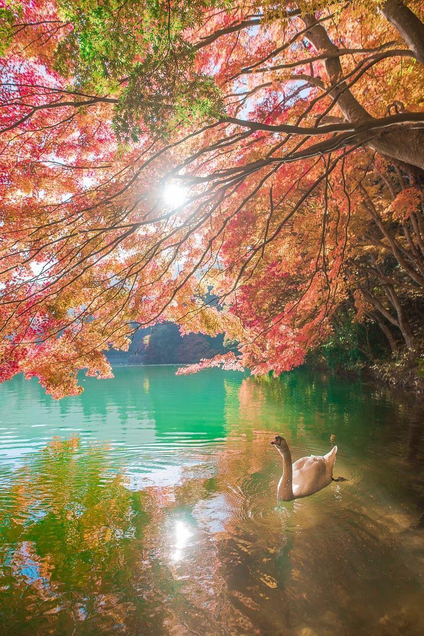 東京カメラ部 Editor S Choice Tokyo Camera Club Pretty Landscapes Beautiful Nature Nature Photography