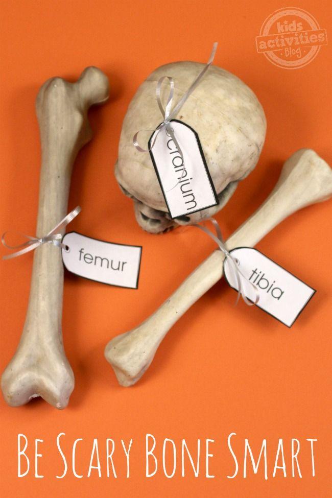 Skeleton Bones Simple Human Anatomy For Kids Anatomy Human