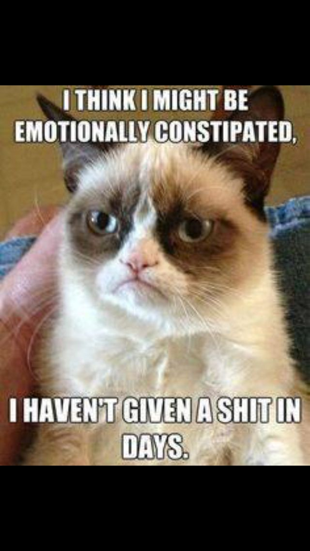Emotionally Constipated Funny Grumpy Cat Memes Grumpy Cat Quotes Grumpy Cat Humor