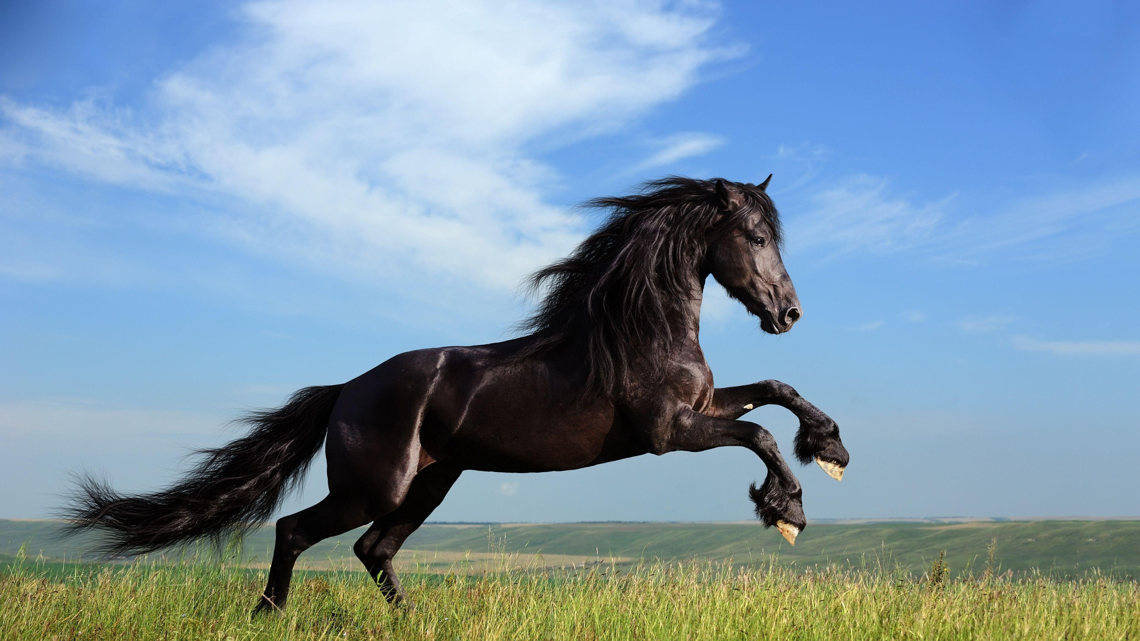 Great Wallpaper Horse Ultra Hd - ed83e58cd96c75de18ce552a9ddf3d2d  Pic_605811.jpg