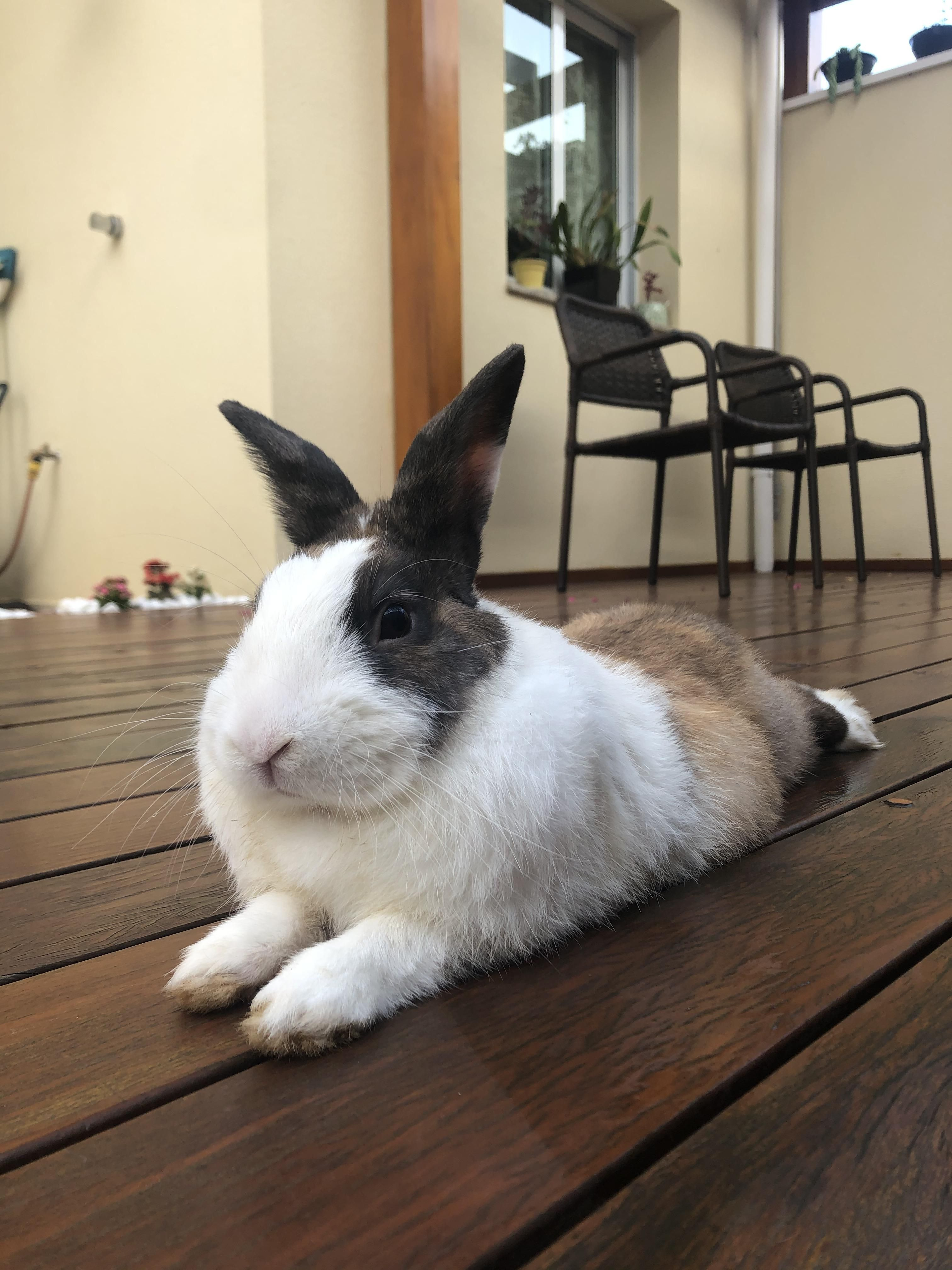 Are Rabbits Easy To Look After Low Maintenance Pets Rabbit