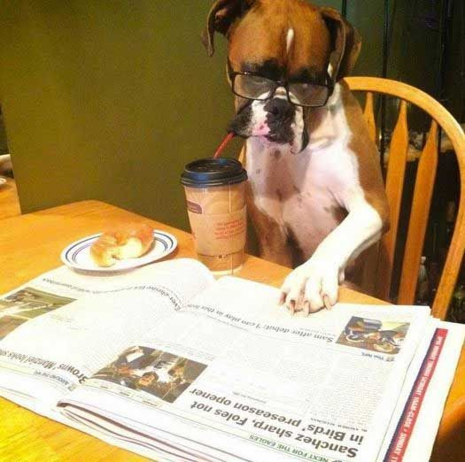 Happy Sunday Dog Cute Animals Adopt Nyc Dog