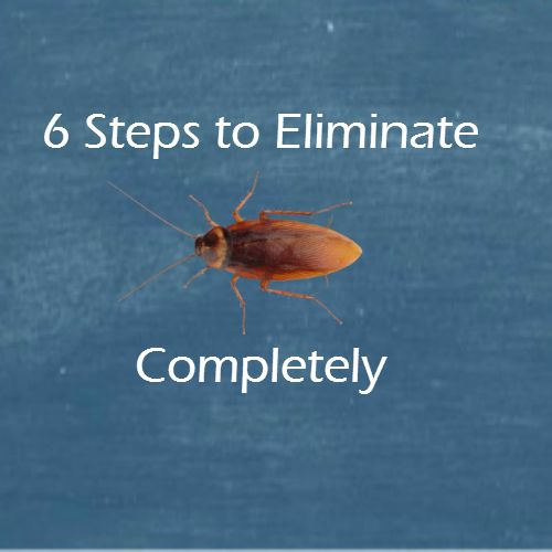 6 Steps To Get Rid Of Cockroaches Completely Roaches Kill
