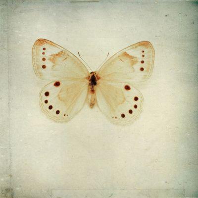 wings by Marianne LoMonaco | pretty | Pinterest