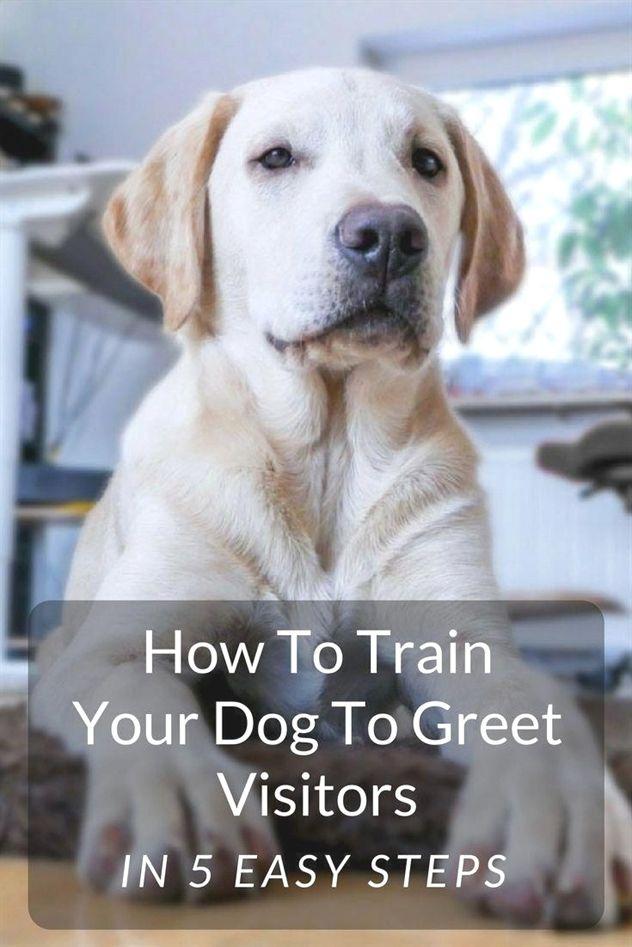 Dog Training Tips Dog Training Tutorial Dog Training 91607