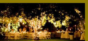 Wedding At The Grove