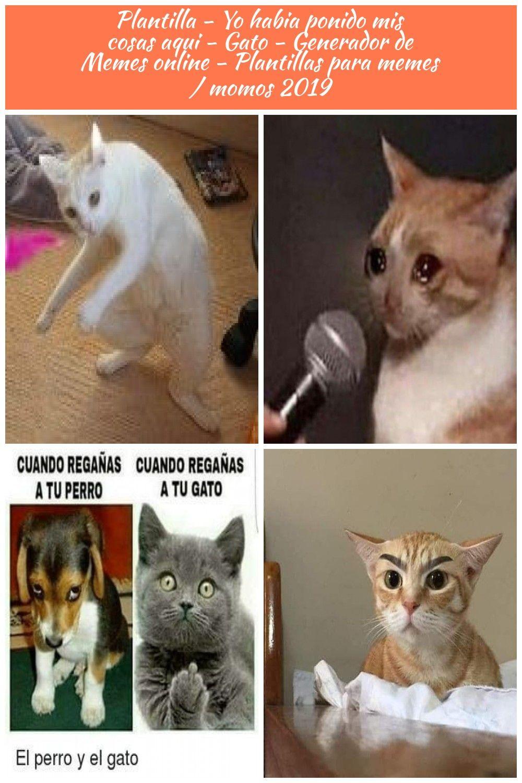 Create Plantilla Yo Habia Ponido Mis Cosas Aqui Gato Meme