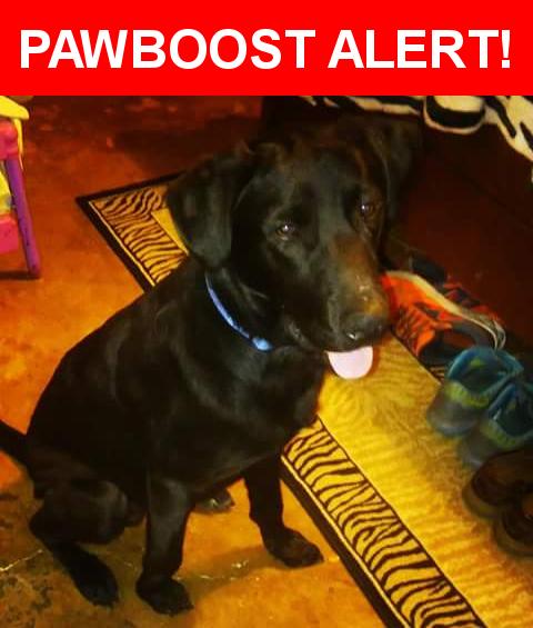 Please spread the word! Odie was last seen in Waco, TX 76706