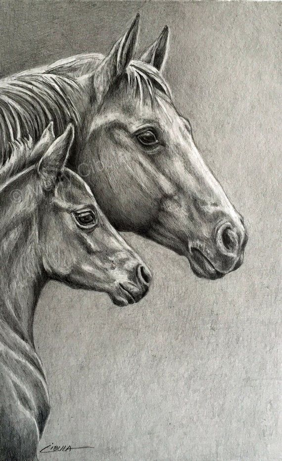 Equine Art. An original equine graphite pencil drawing of a | Etsy