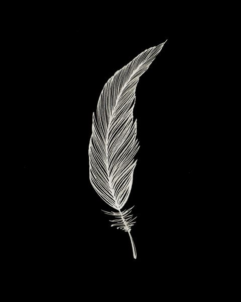 One Feather White Black Art Print Black White Art