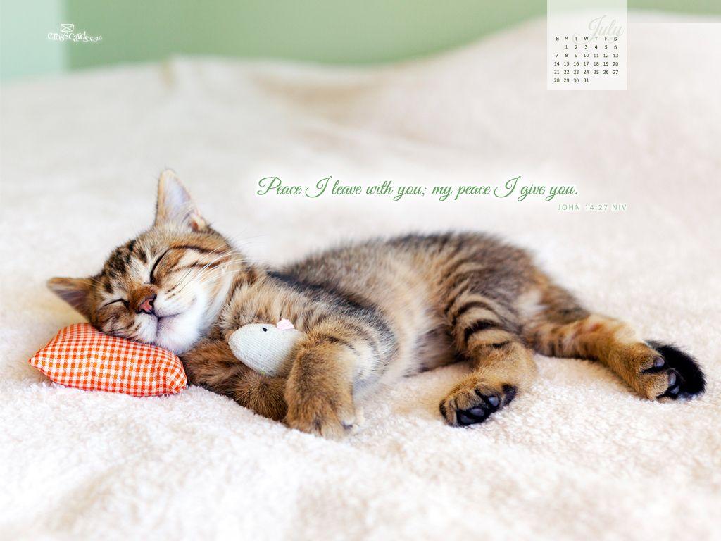 Peace Quietness Gentleness Cute Animals Cats Kittens