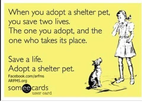 Animaladvocacy Dog Adoption Animal Advocacy Foster Dog