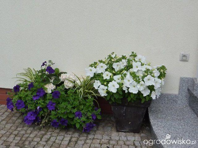 Galeria Zdjec Kwitnace Rosliny Na Balkonach Czyli Jak Dobierac