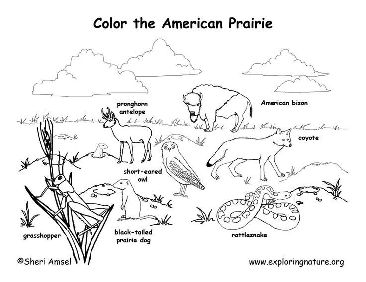 Prairie Habitat Coloring Pages Animal Habitats Habitats Indian