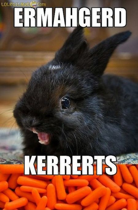 Ermahgerd!  Kerrerts!  Bunny Meme OMG Carrots  - Derp face for carrots.  20 Derpiest Ermahgerds for OMG's   Via  http://www.smosh.com/smosh-pit/memes/20-derpiest-ermahgerds