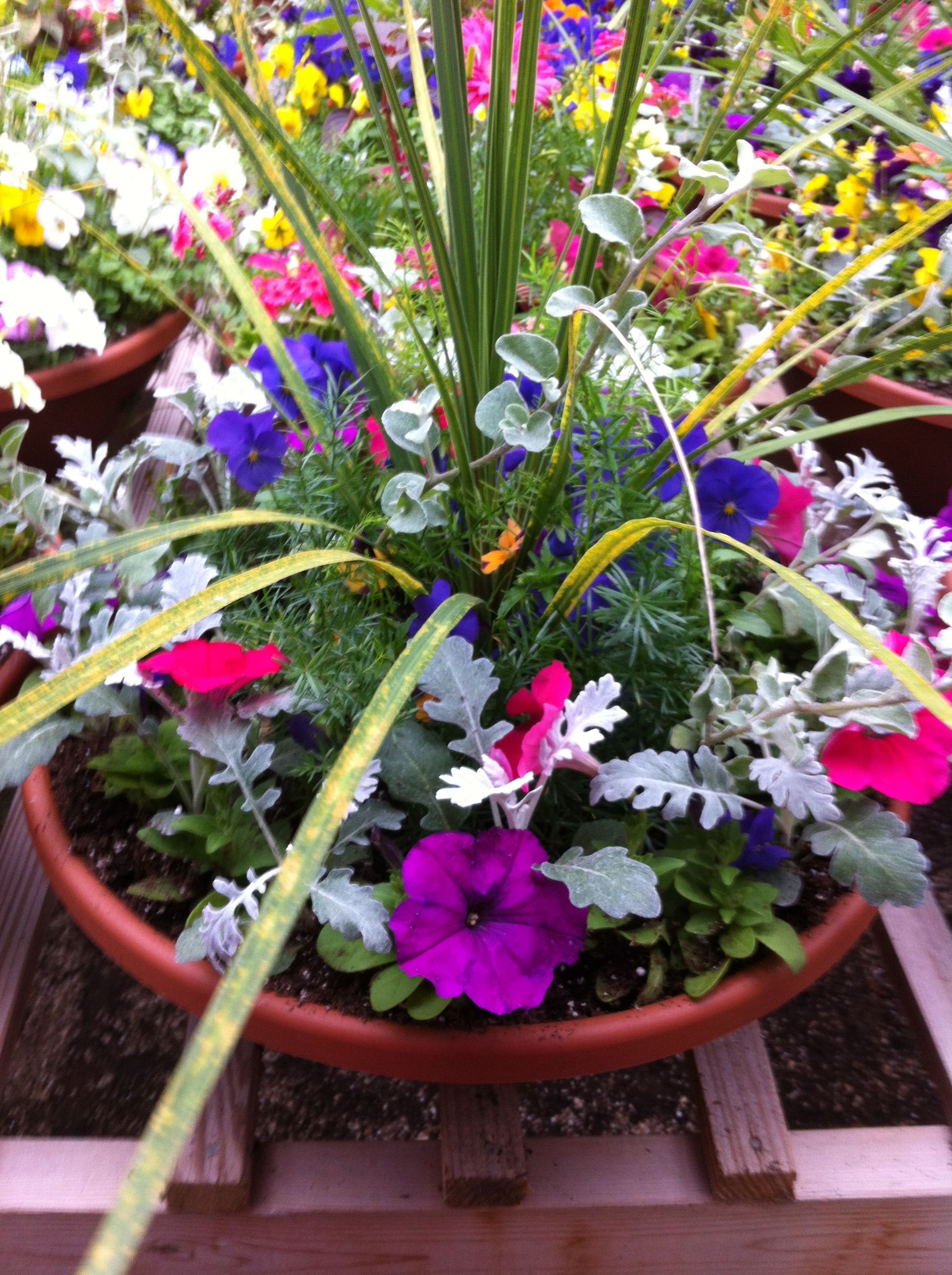 Pin By Lynn Moore On Greenhouse Plants Petunia Flower Flower Pots Container Flowers