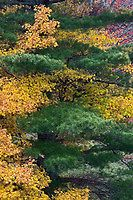 Fall colors in the southern Appalachian Mountains near Grandfather Mountain, North Carolina