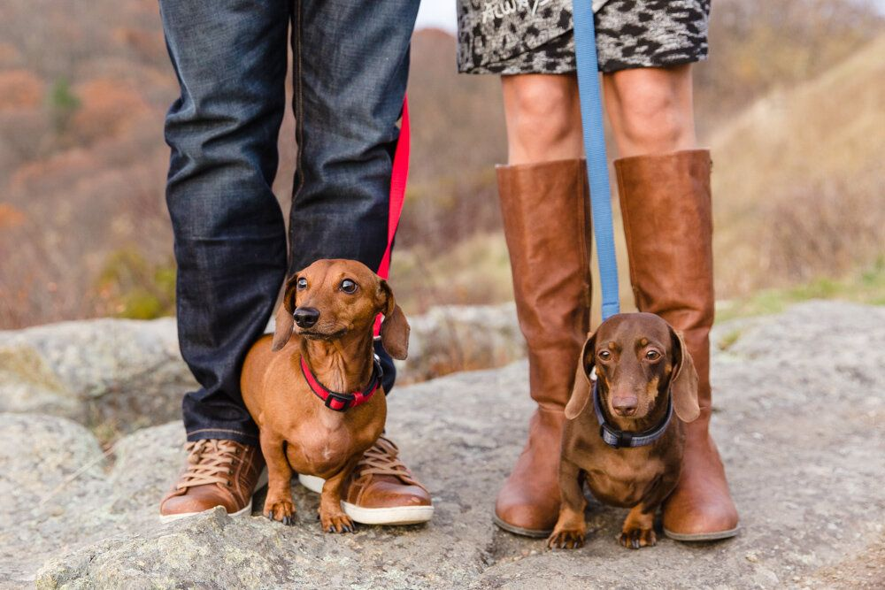 Fall Engagement Session On Skyline Drive Dog Engagement Photos