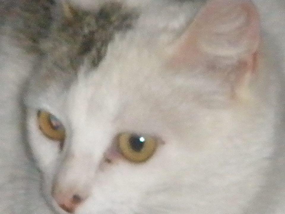 una gata que tuve hace muchos años, foto hecha año 2.004, por Carmen hb