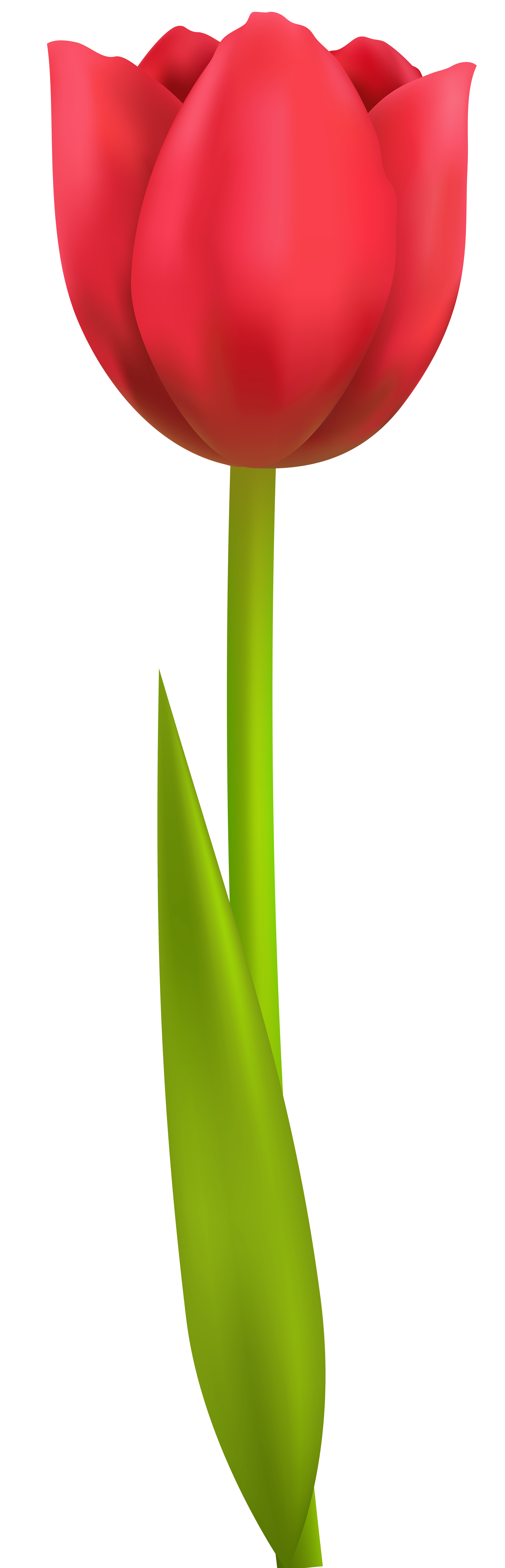 tulip png transparent clip art image tree arboles pinterest rh pinterest com tulip clipart black and white tulip clip art free