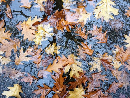 Falling For October&December
