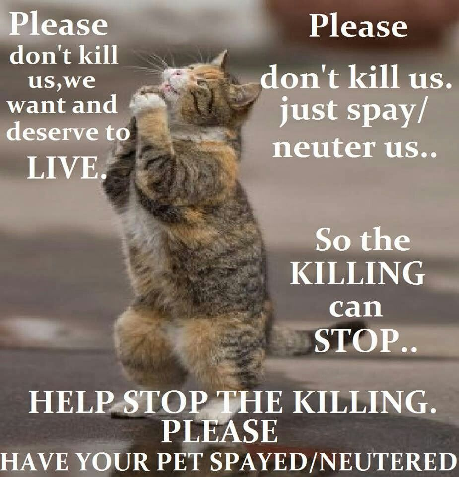 Beautiful Cat with an important message! (With images