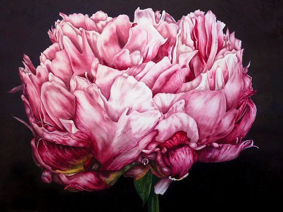 Pink Peony  fine art print  Large archival by BlueShedStudio