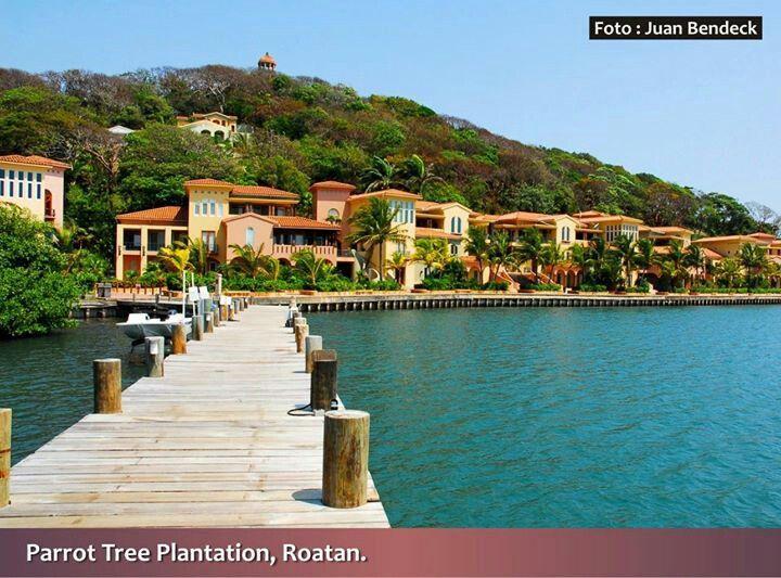 Postales De Honduras Parrot Tree Plantation Roatan Islas De La Bahia
