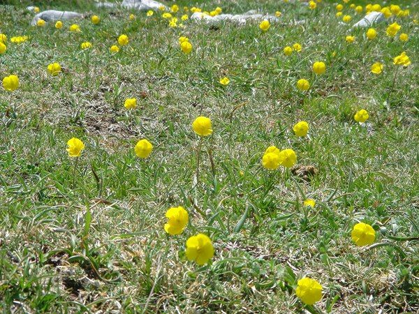 Common Pasture Weeds Learn How To Identify Invasive Noxious And