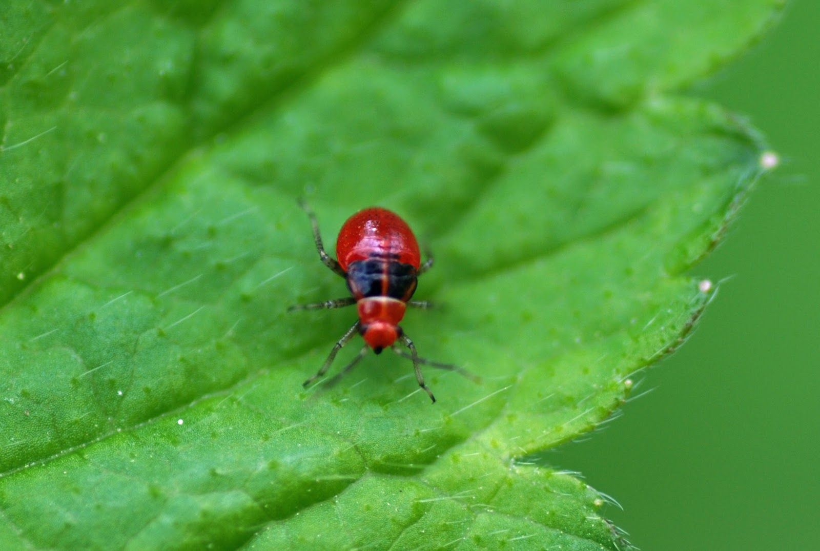 Best Photos Pictures And Images About Bugs Types Of