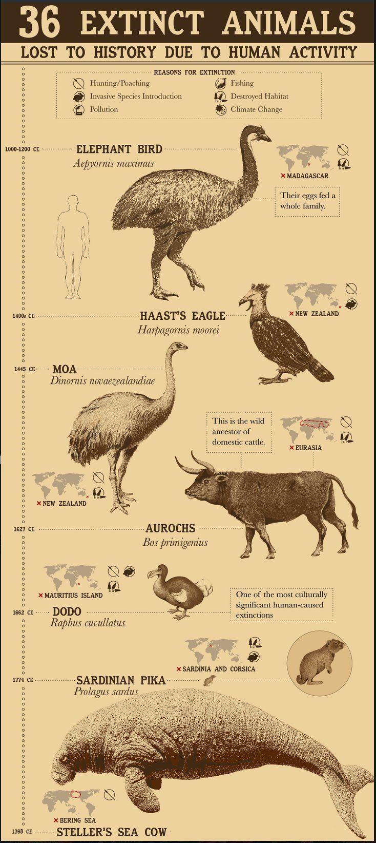 Extinct Animals on Extinct animals, Animals, Animal