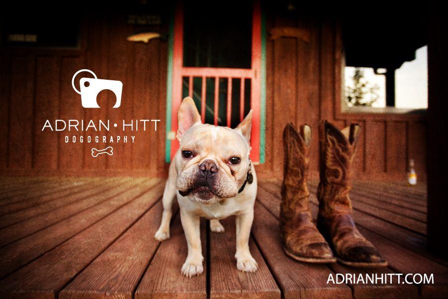 Dog Photographer Nashville Tn French Bulldog Adrian Hitt Dog
