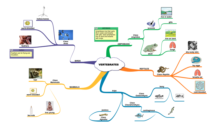 Life Science Mind Map:...