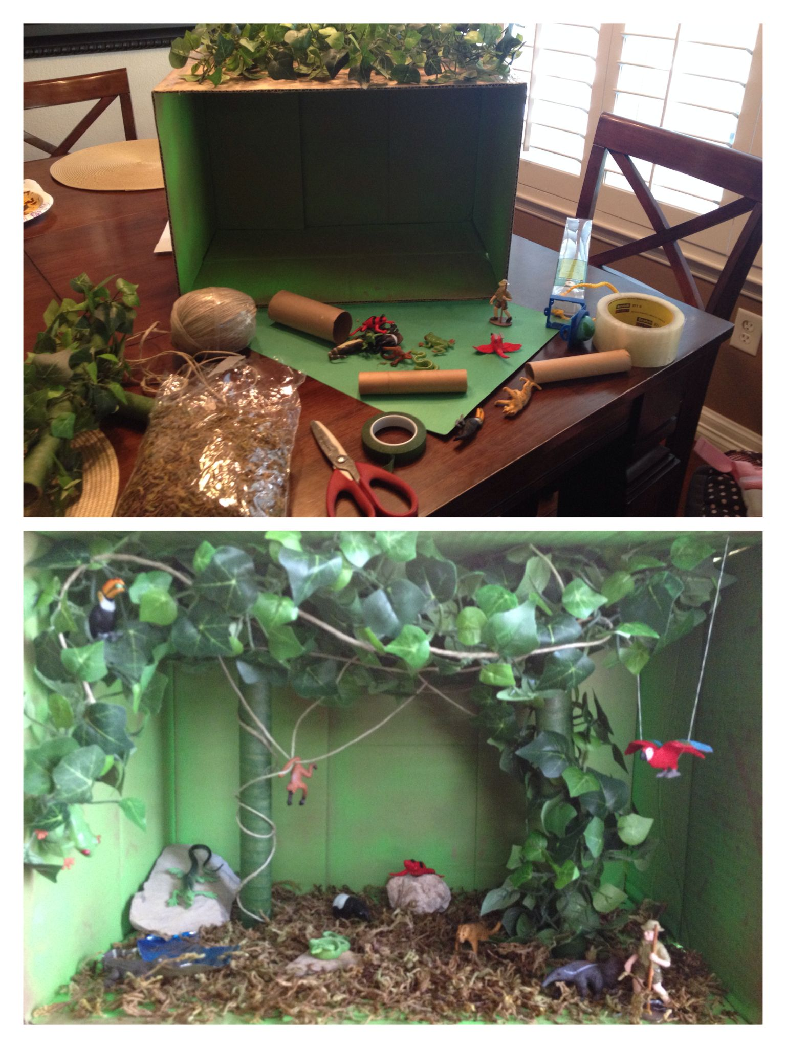 Rainforest Diorama Educational