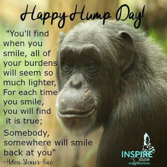 Happy Hump Day Funny Hump Day Memes Wednesday Quotes Hump Day Quotes