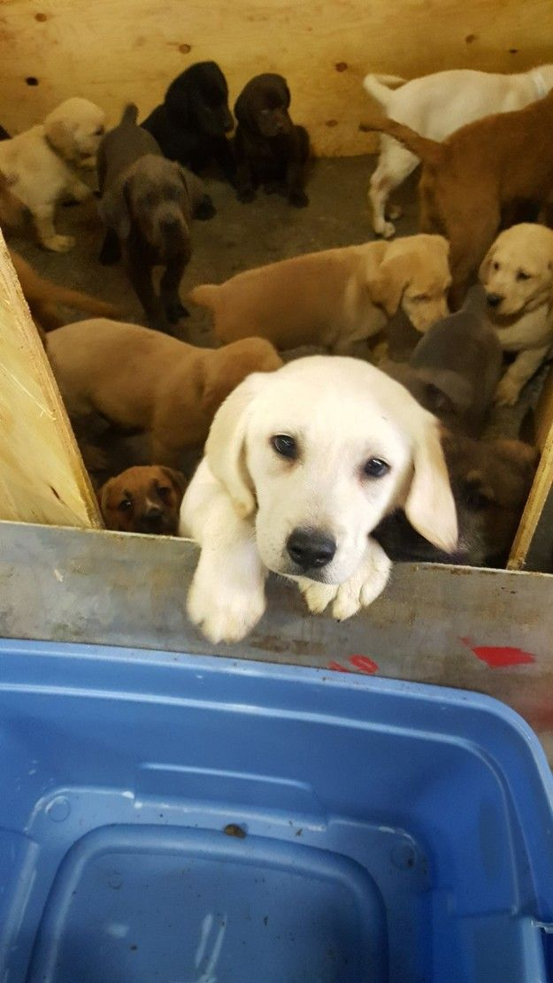 More Than 100 Adorable Puppies Were Rescued From An Overturned Truck Cute Puppies Sick Puppies Puppies