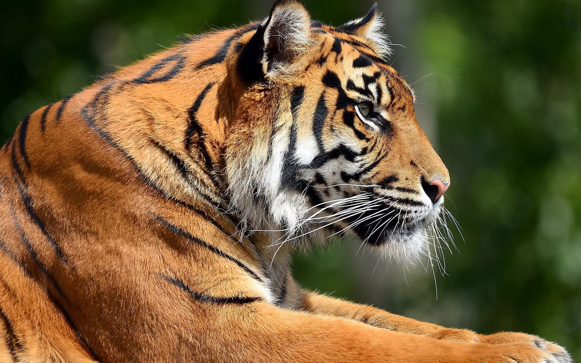 Save The Tigers Before They Are Silenced Forever Tiger Images Bengal Tiger Tiger Profile
