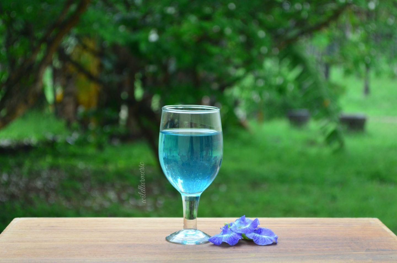 10 Top Health Benefits Of Blue Butterfly Pea Flower Tea